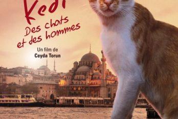 Ciné-Club: Kedi